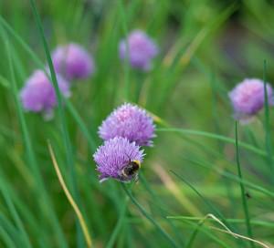 summerbee