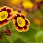 bloemenvreugde
