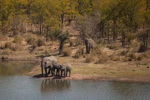 marikarentierfotografie, elephants, olifanten, Afrika, SouthAFrica, Gamepark