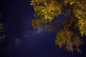marikarentierfotografie, Africanskies, stars